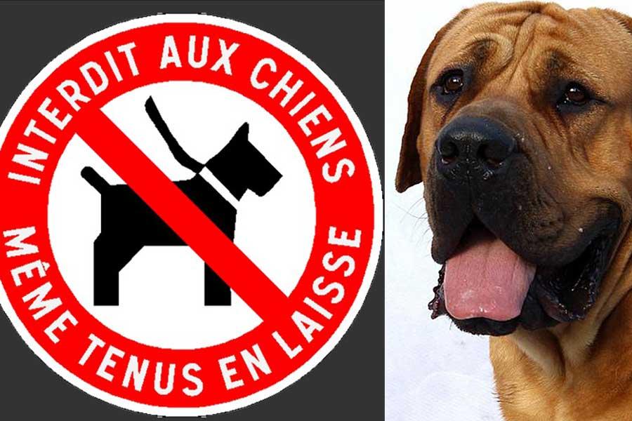 Même tenus en laisse, les chiens n'auront plus accès aux locaux accueillant du public...|Photomontage DR